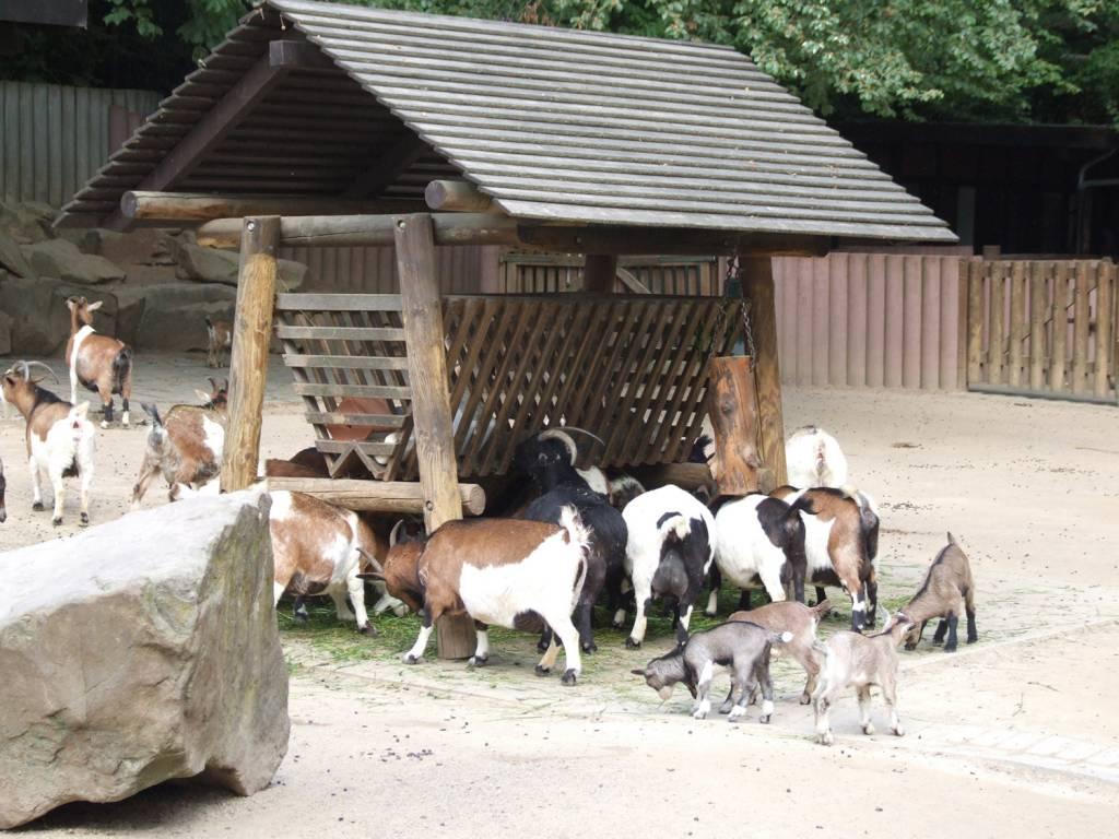 ausflugsziel zoo dortmund in dortmund. Black Bedroom Furniture Sets. Home Design Ideas