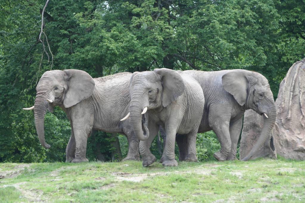 ausflugsziel opel-zoo in kronberg im taunus - doatrip.de