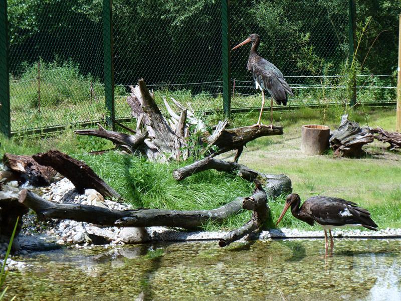 Ausflugsziel Tierpark Kunsterspring in Neuruppin - DOATRIP.de